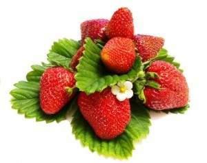 Jahody strawberry