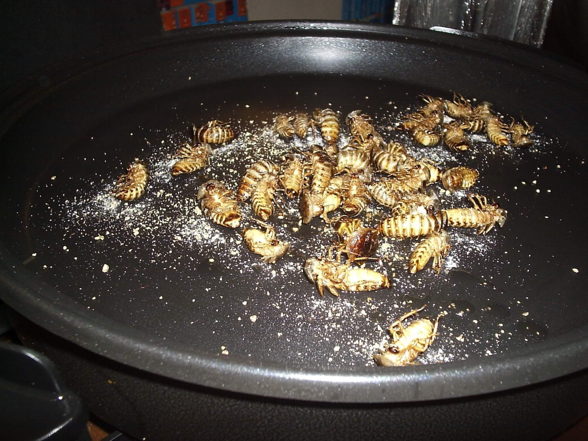 Osmažení a osolení švábi argentinští