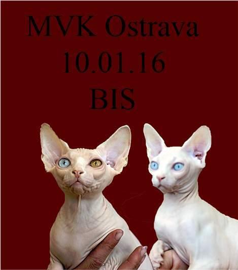výstava koček Ostrava 2016