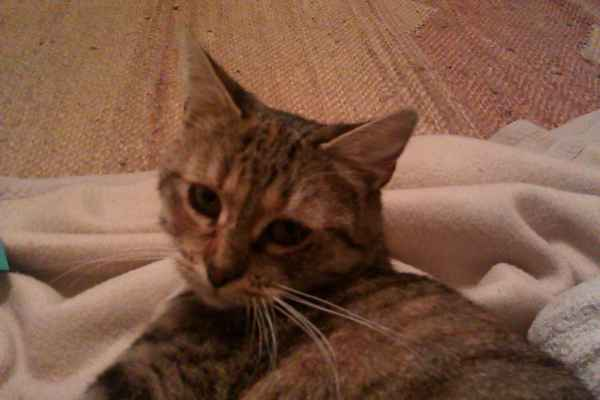 nahé dospívající kočička obrázky