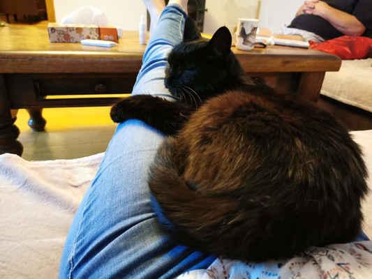 21.9.2020 - Smutná zpráva z domova Radušky. Odešla do kočičého nebe ... Umřela šťastná a milovaná a to je moc důležité ....