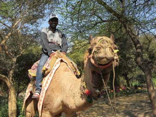 Paráda, zvládli to oba. Na Srí Lance se velbloudi špatně scháním.