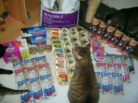 Hodnotit oholenou kočičku