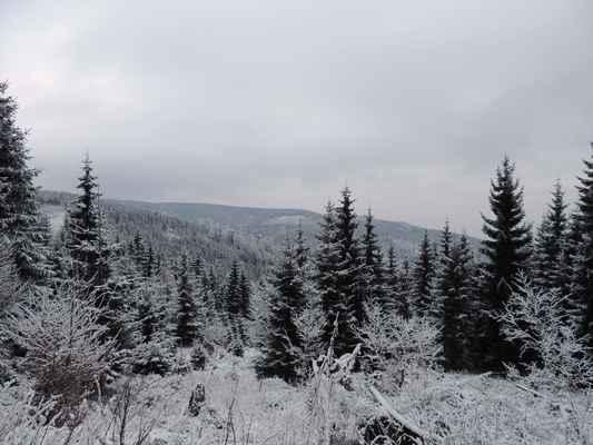 Pohled na Tetřeví vrch.