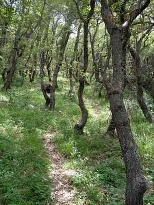 dubový les - Dubrava