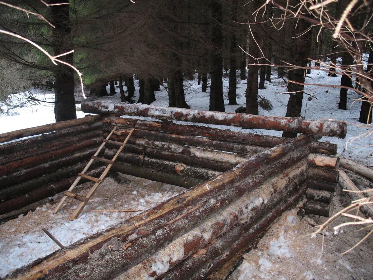 Stavba srubu v lese