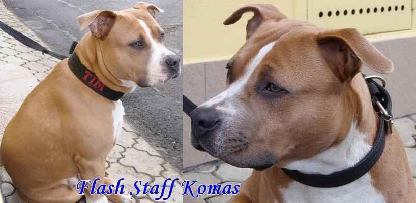 FLASH STAFF KOMAS - 10 měsíců