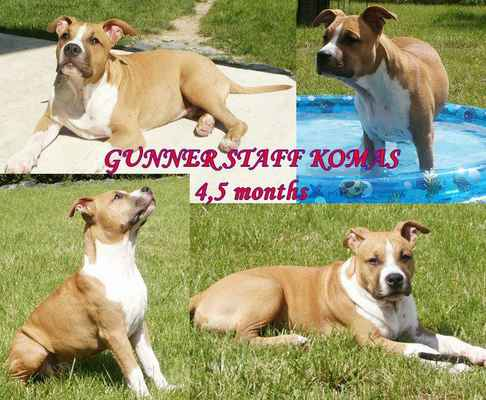 Gunner Staff Komas - 4,5 měsíce